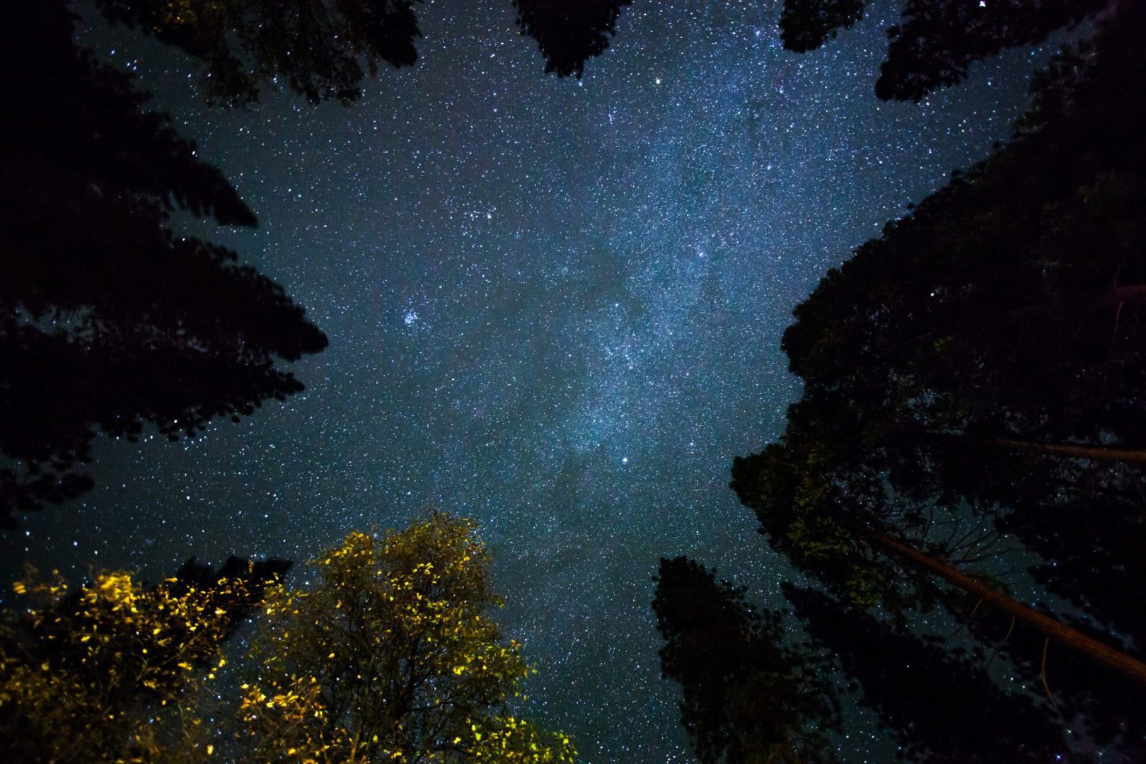 Looking up through the trees at stars